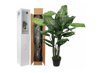 Philodendron im Topf